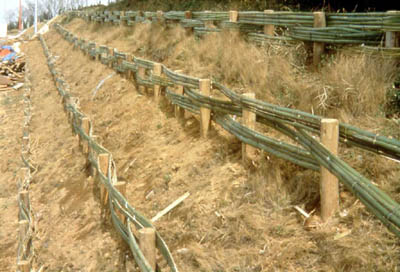 *A slope covered with exotic grass along the path from the main entrance, Yokohama National University(Feb. 1997)