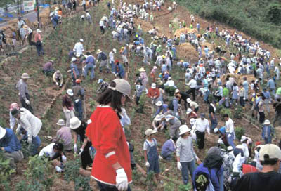 *1100 volunteers planted 13,000 seedlings(Hita City, Oita Pref. Apr. 2000)